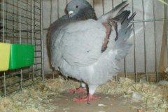 phoca_thumb_l_duiven-23